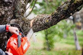 Tree Service Companies Do Far More Than Just Removals